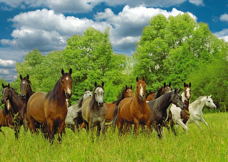 een kudde wilde paarden